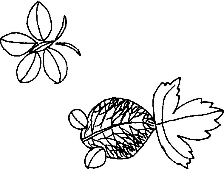巧夺天工 树叶拼贴画