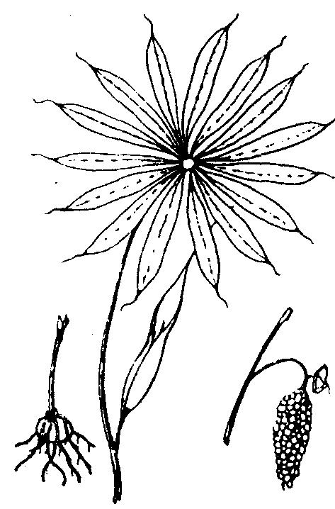 简笔画 设计 矢量 矢量图 手绘 素材 线稿 473_718 竖版 竖屏