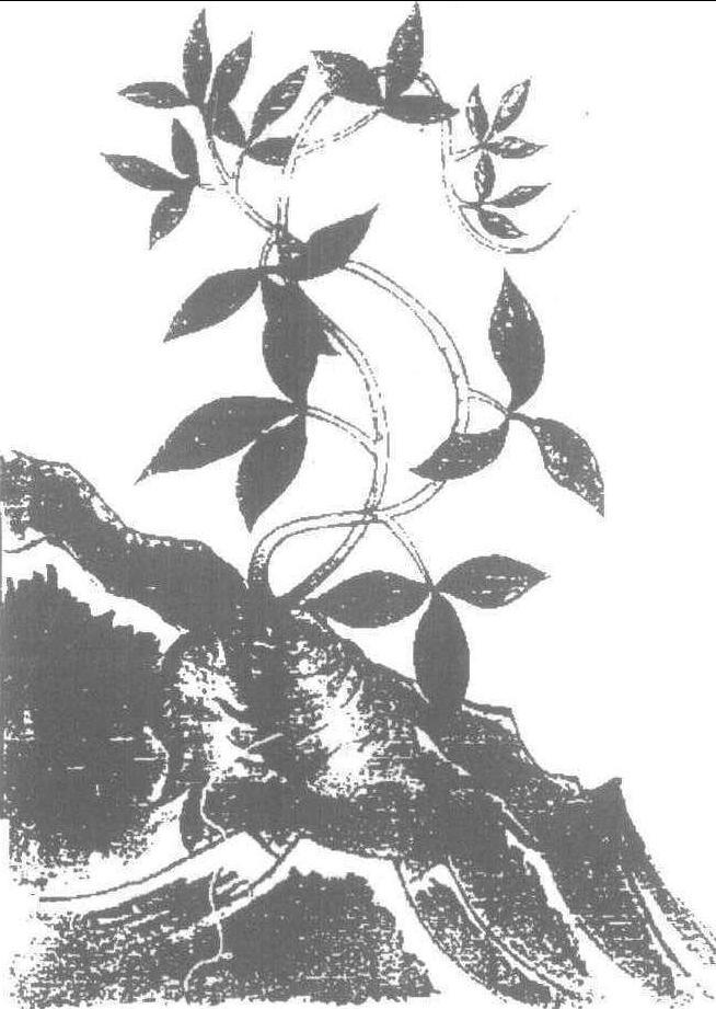 鹅软石 平面 手绘