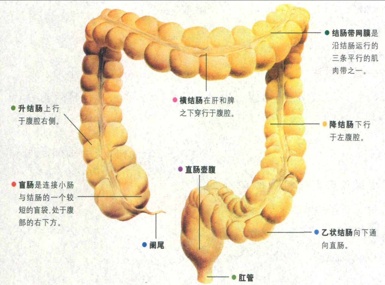 大肠杆菌细胞膜结构