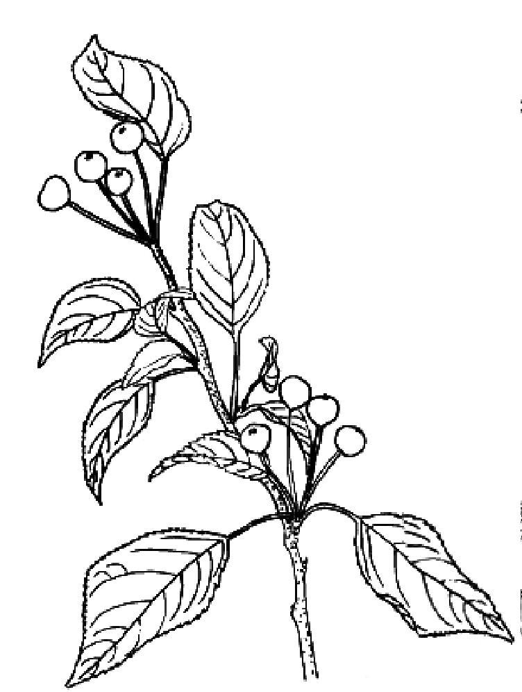 中药志.植物类